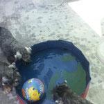 Sommer 2012 - der Versuch die Hunde fürs Pool zu interessieren
