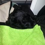 Harry beginnt seinen Tag mit einem gemütlichen Schläfchen auf der Haustiermesse am Wiener Messegelände