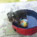 Sommer 2012 - Pepo für 2 Sekunden im Pool