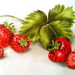 Stilleben mit Erdbeeren - Zeichnung