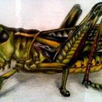 Heuschrecke - Zeichnung