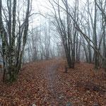 Parcours essentiellement forestier