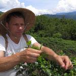 Richy Müller hilft bei der Teeernte auf Sabah