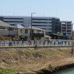 早渕川の遊歩道を1列でウォーキング
