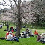 枝垂桜を他の霜ながら昼食・おしゃべり