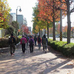 青葉スポーツセンター横の紅葉した街路樹