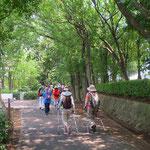 川和中学校横の日蔭道