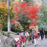 洒水の滝手前の紅葉 見事な紅さに疲れも吹っ飛ぶ