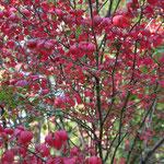 北の丸公園には既に紅葉した木々があり一足早い紅葉を楽しむ