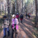 ヘルシンキ「ヌークシオ国立公園」樹木林をウォーキング