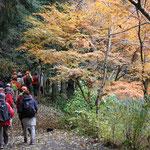 同じく手前には黄葉も楽しませてくれ、道は落葉の絨毯でフカフカ!!