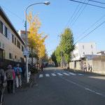 市が尾の黄葉した銀杏並木。日当たりの良い右側は未だ緑