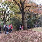 小黒公園の黄葉を眺めつつウォーキング