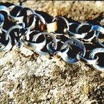 Silber Armband verschiedene Oesen