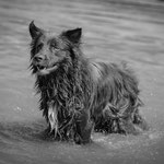 Tierfotografie, Hundeportrait, Haustierfoto