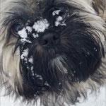 Milo im Schnee 4,5 Monate