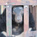 Gemma emprisonnée dans la ferme