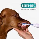 Din hund vil nyde at blive nusset