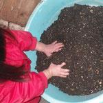 苗床の用の土ほぐし