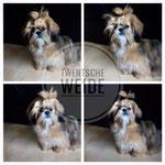foto coulage schitterend boomer puppy langharig