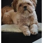 gemailleerd boomer hondje super lief sociaal