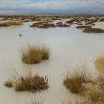 Wasser in der Etosha, Namibia
