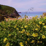 Playa Troenzo, Llanes