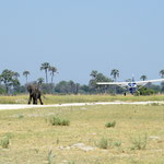 Olifant op de landingsbaan - take 1 (foto: Ronny Wuyts)