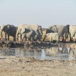Olifantenfamilie aan de waterplas.
