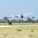 Olifant op de landingsbaan - take 3 (foto: Ronny Wuyts)