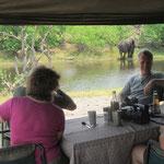 Kamperen in het wild = olifanten gadeslaan tijdens de siësta