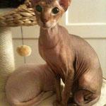 Meine Maus Bagira und Graham.