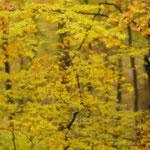 Herbst. Michael Joost