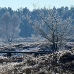 Winter. Hermann Niehus-Schwiertz