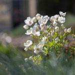 Frühling im Botanischen Garten. Silke Lorenz