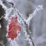 Wasser -gefroren. Tammo Gerdes-Röben