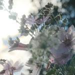 04 - Blütentraum, Heiko Friedel