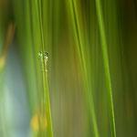 eine versteckte Libelle