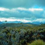 Immer wieder zeigt sich die offene Landschaft auf dem Overland Trek auf Tasmanien