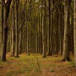 Morgenstimmung im Gespensterwald