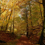 """Herbstlicher Waldweg in der """" Kaskadenschlucht """""""