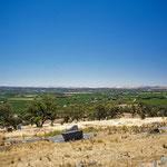 Im Barossa Valley, dem bekanntesten Weinanbaugebiet Australiens