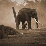 Am frühen Morgen geht es zum Elefanten reiten