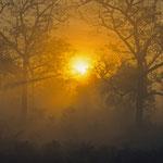 Ein traumhafter Sonnenaufgang im Regenwald