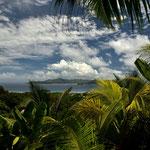 Ein Blick unter Palmen auf Praslin