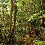 """Durch einen Märchenhaften Regenwald  im """" Morne Seychelloise National Park """""""