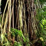 Ein Spaziergang durch den Botanischen Garten von Victoria lohnt sich auf jeden Fall