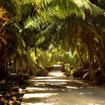 Die Straße unter Palmen führt zur Anse Intendance im Süden von Mahe