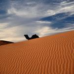 Kommt ein Kamel umd die Ecke