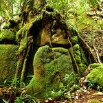"Im "" Morne Seychelloise National Park "" auf Mahe"
